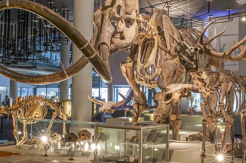 Naturalis museum